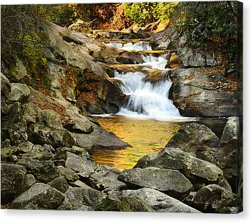 Golden Pond Canvas Print