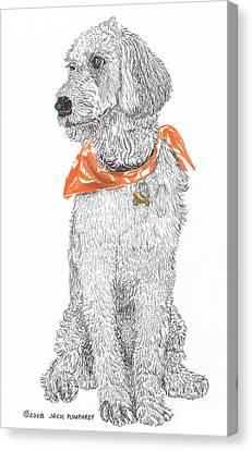 Golden Poodle Canvas Print by Jack Pumphrey