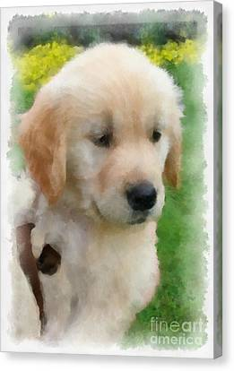 Golden Puppy Owen Canvas Print by Betsy Cotton