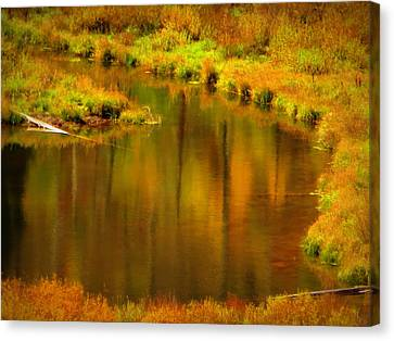 Canvas Print featuring the photograph Golden Reflections by Karen Shackles