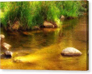 Golden Reflections Canvas Print by Michelle Wrighton