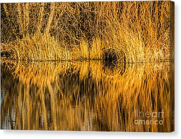 Canvas Print featuring the photograph Golden Reflections by Sue Smith