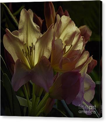 Golden Reserve Canvas Print by Jean OKeeffe Macro Abundance Art
