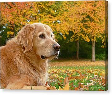 Golden Retriever Dog Autumn Leaves Canvas Print by Jennie Marie Schell