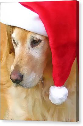 Golden Retriever Dog In Santa Hat  Canvas Print by Jennie Marie Schell