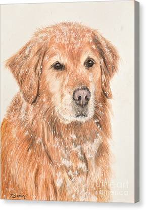 Golden Retriever In Snow Canvas Print