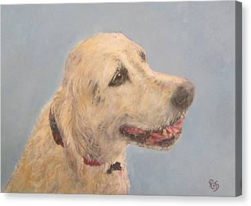 Pet Portrait Of Golden Retriever Maisie  Canvas Print by Richard James Digance