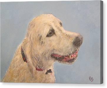 Pet Portrait Of Golden Retriever Maisie  Canvas Print