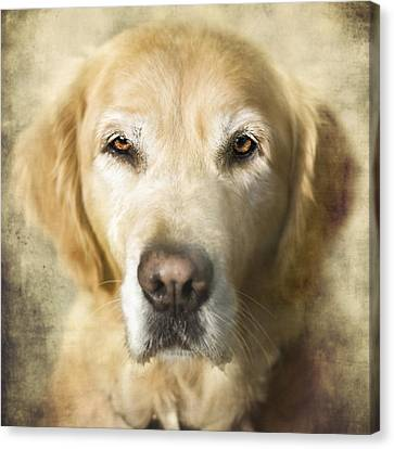 Golden Retriever Portrait Canvas Print by Wolf Shadow  Photography