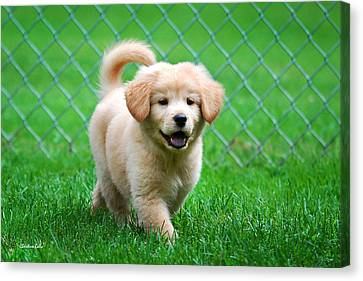 Golden Retriever Puppy Canvas Print by Christina Rollo