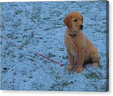 Golden Retriever Puppy In The Snow Canvas Print by Dan Sproul