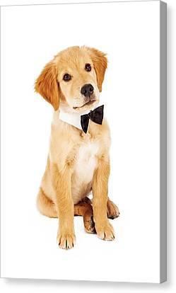 Golden Retriever Puppy Wearing Bow Tie Canvas Print by Susan Schmitz