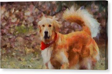 Golden Retriever Red Bandana Canvas Print by Dan Sproul