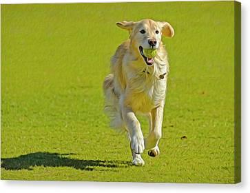 Golden Retriever Running On A Green Canvas Print by Rona Schwarz