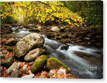 Golden River Rush Canvas Print by Deborah Scannell