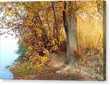 Golden Riverbank Canvas Print