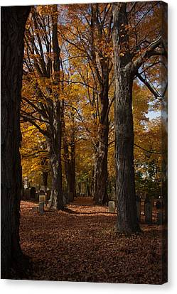 Canvas Print featuring the photograph Golden Rows Of Maples Guide The Way by Jeff Folger