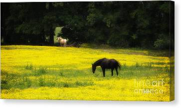 Golden Rule Canvas Print by Cris Hayes