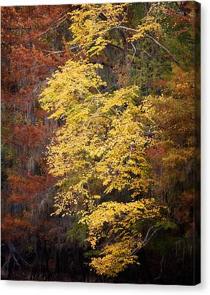 Canvas Print featuring the photograph Golden Rust by Lana Trussell