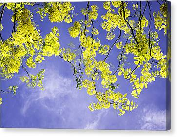 Golden Shower Canvas Print by VistoOnce Photography