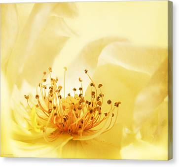 Golden Showers Rose Canvas Print by Deborah Smith