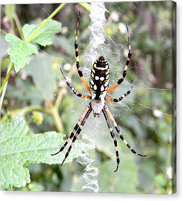 Canvas Print featuring the photograph Golden Silk Spider by Jodi Terracina