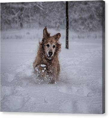 Golden Snow Canvas Print by John Crothers