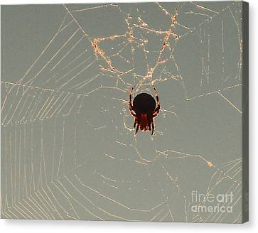 Canvas Print featuring the photograph Golden Spider by Cheryl Del Toro
