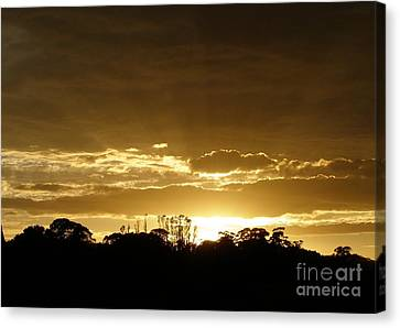 Canvas Print featuring the photograph Golden Sunrise by Bev Conover