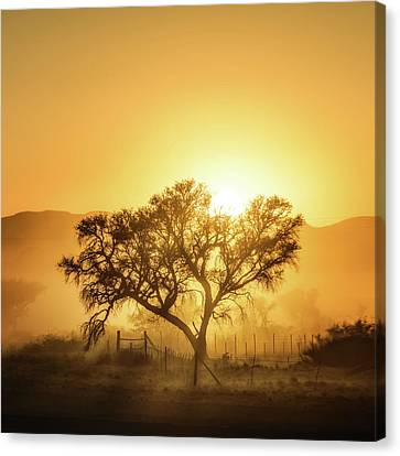 Golden Sunrise Canvas Print by Piet Flour