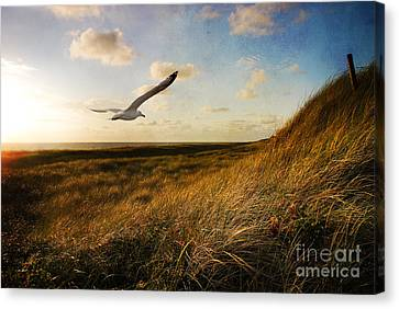 Above Golden Dunes Canvas Print by Hannes Cmarits