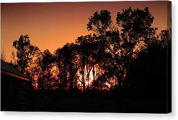 Golden Sunset Canvas Print by Rebecca Davis