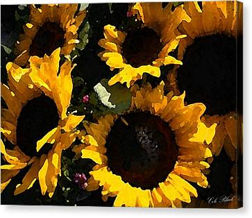 Golden Sunshine Canvas Print by Cole Black
