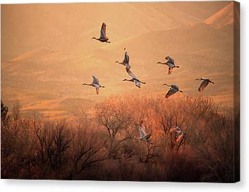 Crane Canvas Print - Golden Time by Hao Jiang