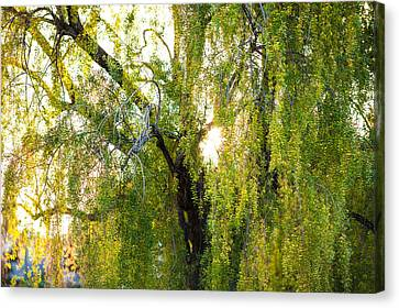 Golden Treelight Canvas Print by Mike Lee