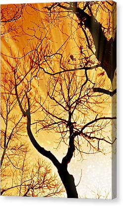 Golden Trees Canvas Print by Marty Koch