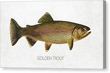 Golden Trout Canvas Print by Aged Pixel