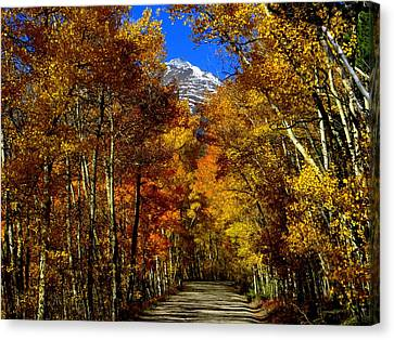 Canvas Print featuring the photograph Golden Tunnel by Karen Shackles