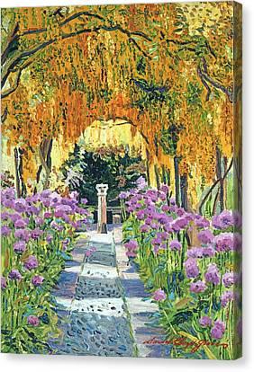 Agapanthus Canvas Print - Golden Walk by David Lloyd Glover