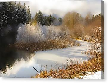 Canvas Print featuring the photograph Golden Winter by Sonya Lang