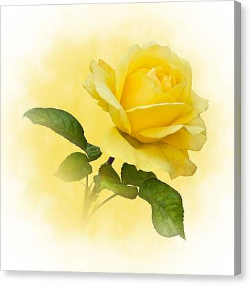 Golden Yellow Rose Canvas Print