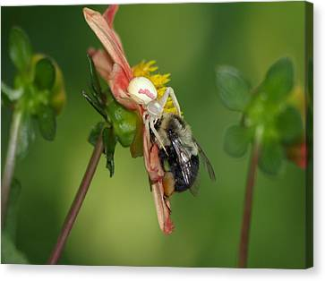 Canvas Print featuring the photograph Goldenrod Spider by James Peterson