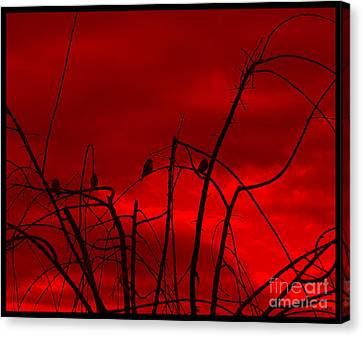 Canvas Print featuring the photograph Goldfinch Against Red by Heidi Manly