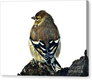 Goldfinch At Sunrise Canvas Print