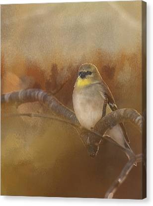 Resting Goldfinch Canvas Print by Betty  Pauwels