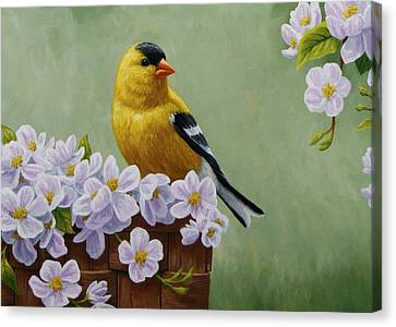 Bird Song Canvas Print - Goldfinch Blossoms Greeting Card 3 by Crista Forest