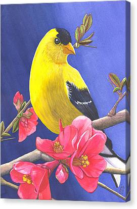 Goldfinch Canvas Print by Catherine G McElroy