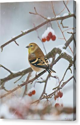 Goldfinch In Snow Canvas Print