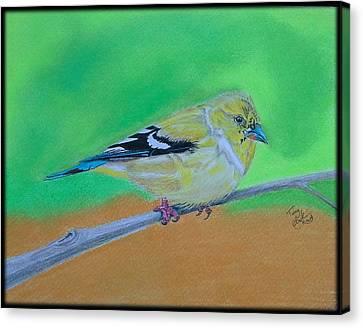 Goldfinch Canvas Print by Tony Clark