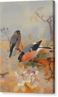 Yellow Beak Canvas Print - Goldfinches Bullfinches by Archibald Thorburn